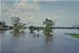 Natural Disasters Amazon River Rainforest